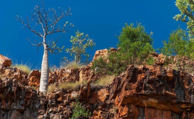 Carol Darby's Kimberley photographic safari