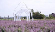 2020桃園仙草花節將登場 展紫粉色浪漫