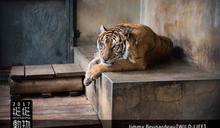 我們與野生動物的距離:鏡頭背後的公民行動與反思