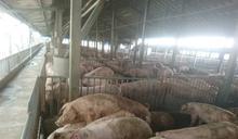馬來西亞發生非洲豬瘟 入境攜其豬肉品改罰20萬元