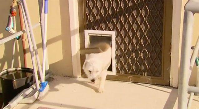 Princess went through a doggie door to get help. Source: 7 News