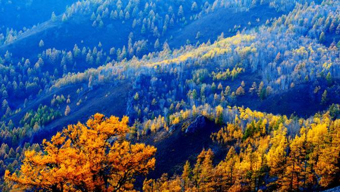 Foto pada 26 September 2020 menunjukkan pemandangan sebuah hutan di Kota Arxan, Daerah Otonom Mongolia Dalam, China utara. Lahan yang mengalami desertifikasi dan sandifikasi di Mongolia Dalam telah berkurang dalam 15 tahun beruntun. (Xinhua/Jia Lijun)