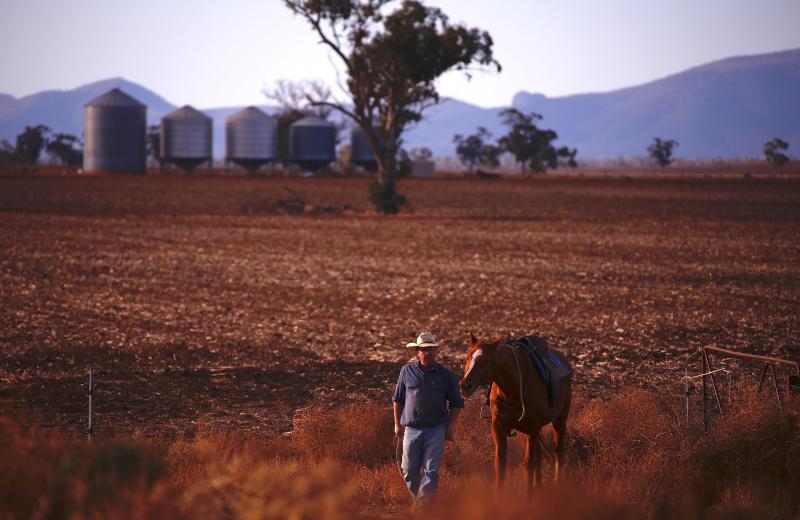 b467d82bef Australian drought  PETA slams farmers over millions of animal deaths