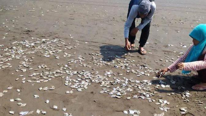 Jutaan ikan mati dan terdampar di Pantai Cemarasewu, Jetis, Cilacap, Jawa Tengah, Sabtu, 12 Oktober 2019. (Foto: Liputan6.com/Sarjono HNSI/Muhamad Ridlo)