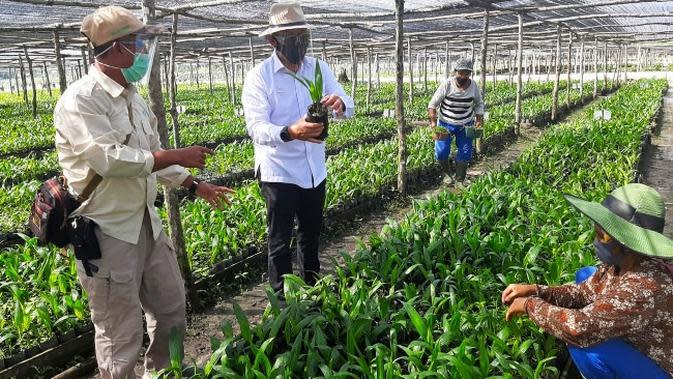 Sukseskan Peremajaan Sawit Rakyat, PTPN V Siapkan Bibit Unggul ke Petani Swadaya