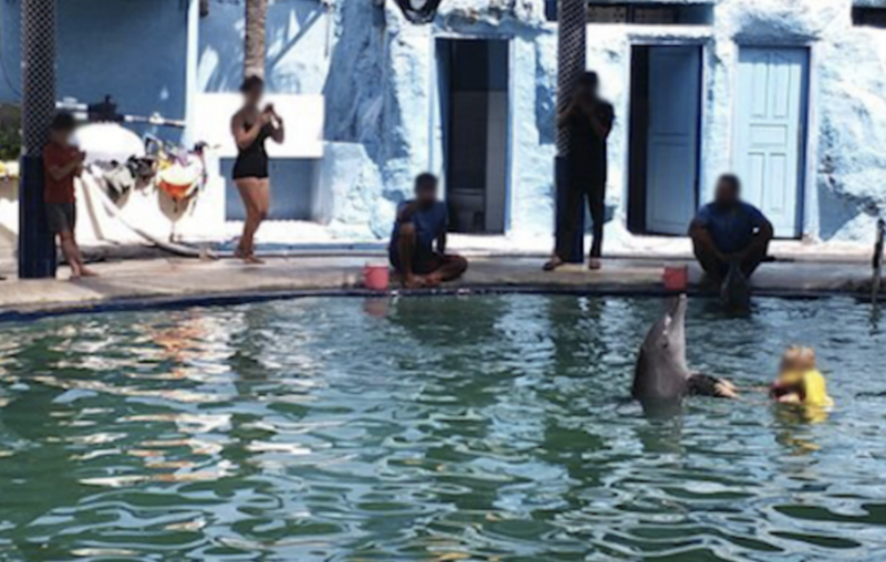 A dolphin in the pool at the Melka hotel is surrounded by people, with one in the water.