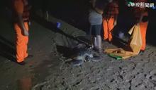 綠蠵龜疑迷途擱淺 金門海巡即刻救援
