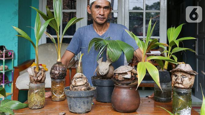 Pengrajin tanaman, Herman Ronda bersama bonsai kelapa yang dikreasi dengan unik di Jalan Salak, Pamulang, Tangerang Selatan, Senin (13/10/2020). Perawatan bonsai batok kelapa sangatlah mudah, hanya disiram dengan air garam dan ditempatkan pada suhu yang lembab. (Liputan6.com/Fery Pradolo)