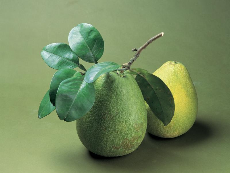 「維生素C的寶庫」 柚子有助排毒美容