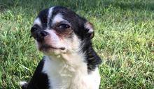 主人過世2週無人發現 愛犬為生存吃腐屍內疚陷入陰霾