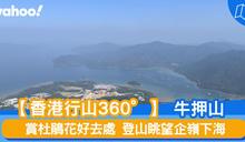 【行山路線】360度睇牛押山:賞杜鵑花好去處 登山眺望企嶺下海