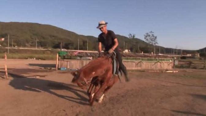 Kuda berwarna coklat ini punya kebiasaan kocak pura-pura saat ada orang yang akan menungganginya. (Sumber: Elite Readers)