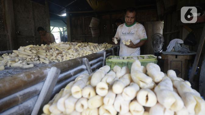Pekerja sedang memproses pembuatan tape singkong kuning di Kampung Poncol, Desa Curug, Gunung Sindur, Kabupaten Bogor, Jawa Barat, Rabu (7/10/2020). Tape singkong kuning tersebut didistribusikan ke wilayah Jakarta dan sekitarnya dengan harga Rp 10 ribu per kilogram. (merdeka.com/Dwi Narwoko)