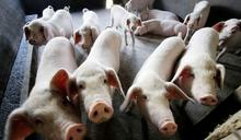 美麗島電子報民調》萊豬怒火燒向2022?5成5民眾表態不投挺萊豬候選人