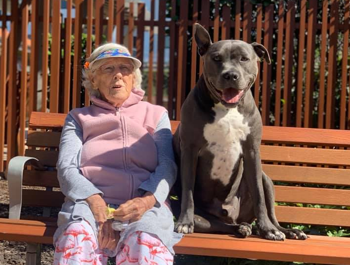 Val Hooper is pictured with her grandson's Staffordshire Terrier on a bench together.