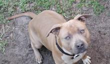 遛狗未善盡管理責任,除違反動保法、還會有刑事責任?