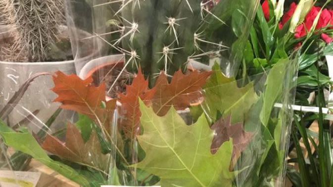 Supermarket di Inggris tuai kecaman karena menjual dedauan musiman yang tumbuh saat musim gugur (Dok.Twitter/@sharonihanley/https://twitter.com/sharonlhanley?lang=en/Komarudin)