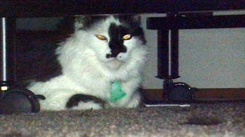 "FILE - In this Tuesday, March 11, 2014 file photo, Lux, the family cat of Teresa Barker and her boyfriend Lee Palmer and their 8-month-old son, Jesse, hides under a bed at the family's home in Portland, Ore. Cats don't become ferocious felines that turn on their families for no reason, says the cat behavior expert Jackson Galaxy, star of Animal Planet's ""My Cat from Hell"", who is heading to Portland soon to work with the 4-year-old part-Himalayan pet named Lux. Galaxy will film the visit for his show's fifth season, which kicks off April 26. (AP Photo/The Oregonian, Stuart Tomlinson, File) MAGS OUT; TV OUT; LOCAL TV OUT; LOCAL INTERNET OUT; THE MERCURY OUT; WILLAMETTE WEEK OUT; PAMPLIN MEDIA GROUP OUT"