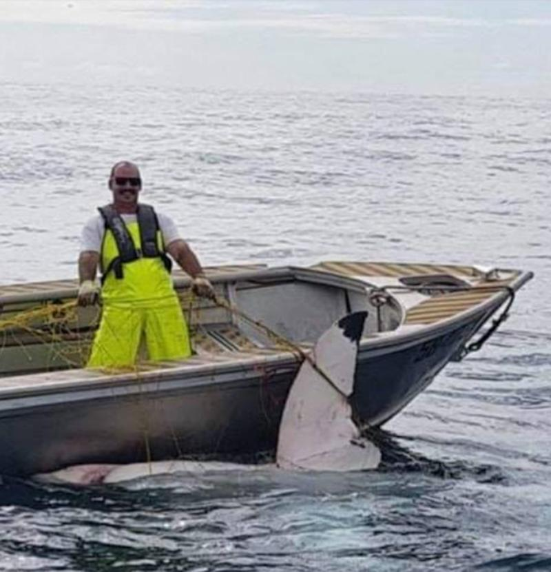 A great white shark was netted off Maroubra