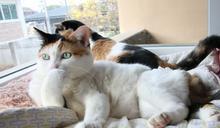 有心事?貓咪手撐頭「若有所思」 網笑:需要聊聊!
