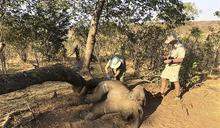 國際組織警告 野生動物近半世紀減少2/3