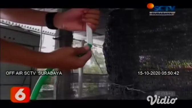 VIDEO: Beternak Cacing Saat Pandemi, Pria Ini Raup Omzet Jutaan Rupiah