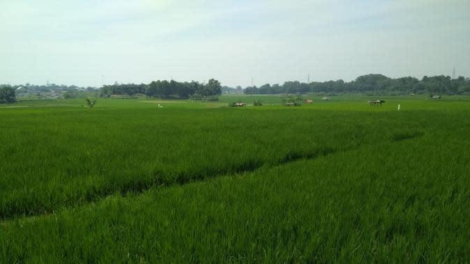 Kabupaten Sleman berhasil membranding berashasil produk Gabungan Kelompok Tani (Gapoktan ) di wilayahnya. Dok Kementan