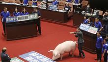 【Yahoo論壇】民進黨想開放美豬?準備被民意轟下台吧
