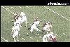 2007 NFL Draft: Dan Bazuin
