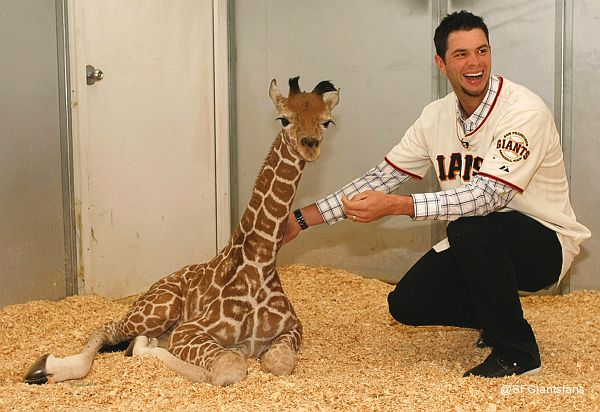 Brandon, meet Brandon: Giants' Belt schmoozes giraffe namesake