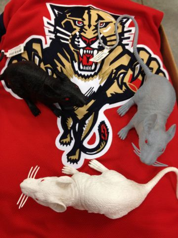 The rats are officially back for the Florida Panthers