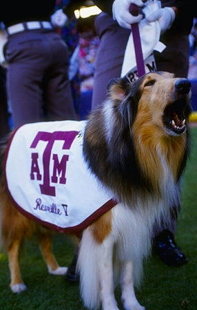 Headlinin': Eyes of Texas A&M are still on the Longhorn Network