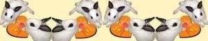 橘子兔(只賣現貨)