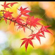 楓紅林雨 / 片片都是一首詩