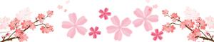初夏的櫻花