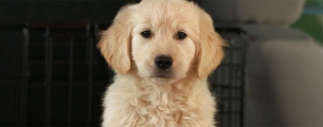 GoDaddy on hot seat over lost-puppy ad