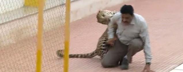Leopard mauls six in India