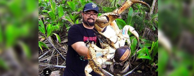 Man picks up giant coconut crab
