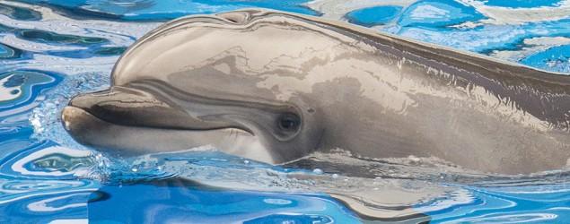 Dolphin dies at SeaWorld San Antonio. (Getty Images)