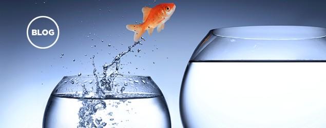 Peixe mudando de aquário - Foto: GettyImages