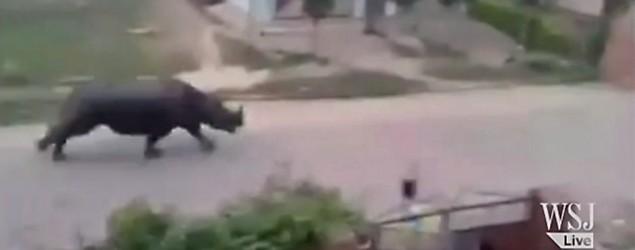Runaway rhino kills one and injures six in Nepal. (Kishan Poudel/Facebook/The Wall Street Journal)