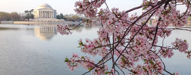 Cherry blossoms dating info review 1