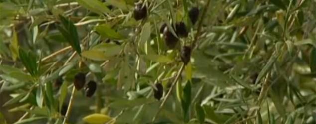 El hallazgo ocurrió cerca de París (imagen de vídeo)
