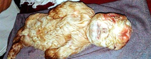 Goat born with a human face sends village into meltdown