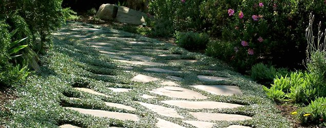 Plant alternatives to spruce up your lawn