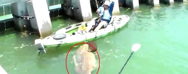 Jon Black pescó un mero de más de 500 libras desde su kayak. (YouTube)
