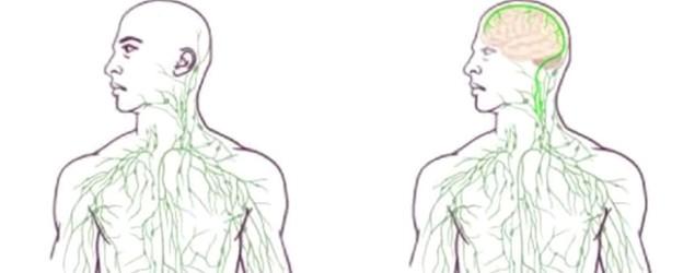 Abbildung des alten (links) und des neuen (rechts) Lymphsystems (Screenshot: Twitter/Neuroscience News)