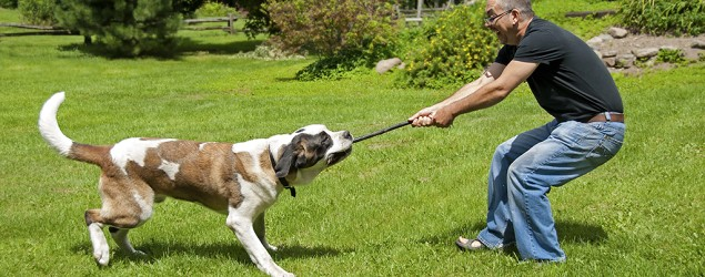 Want to get healthy? Look to your dog (Thinkstock)