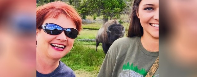 A Mississippi woman was flipped and tossed by a bison at Yellowstone National Park. (ABC News)