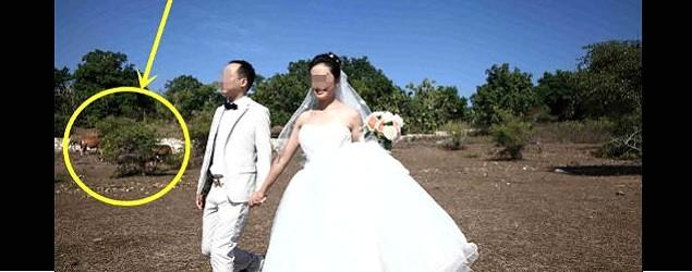 新人婚照 峇里背景失蹤